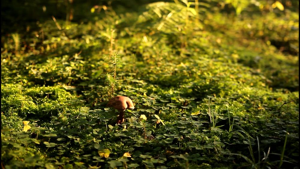 Schönen Wald gibts hier im Waldviertel